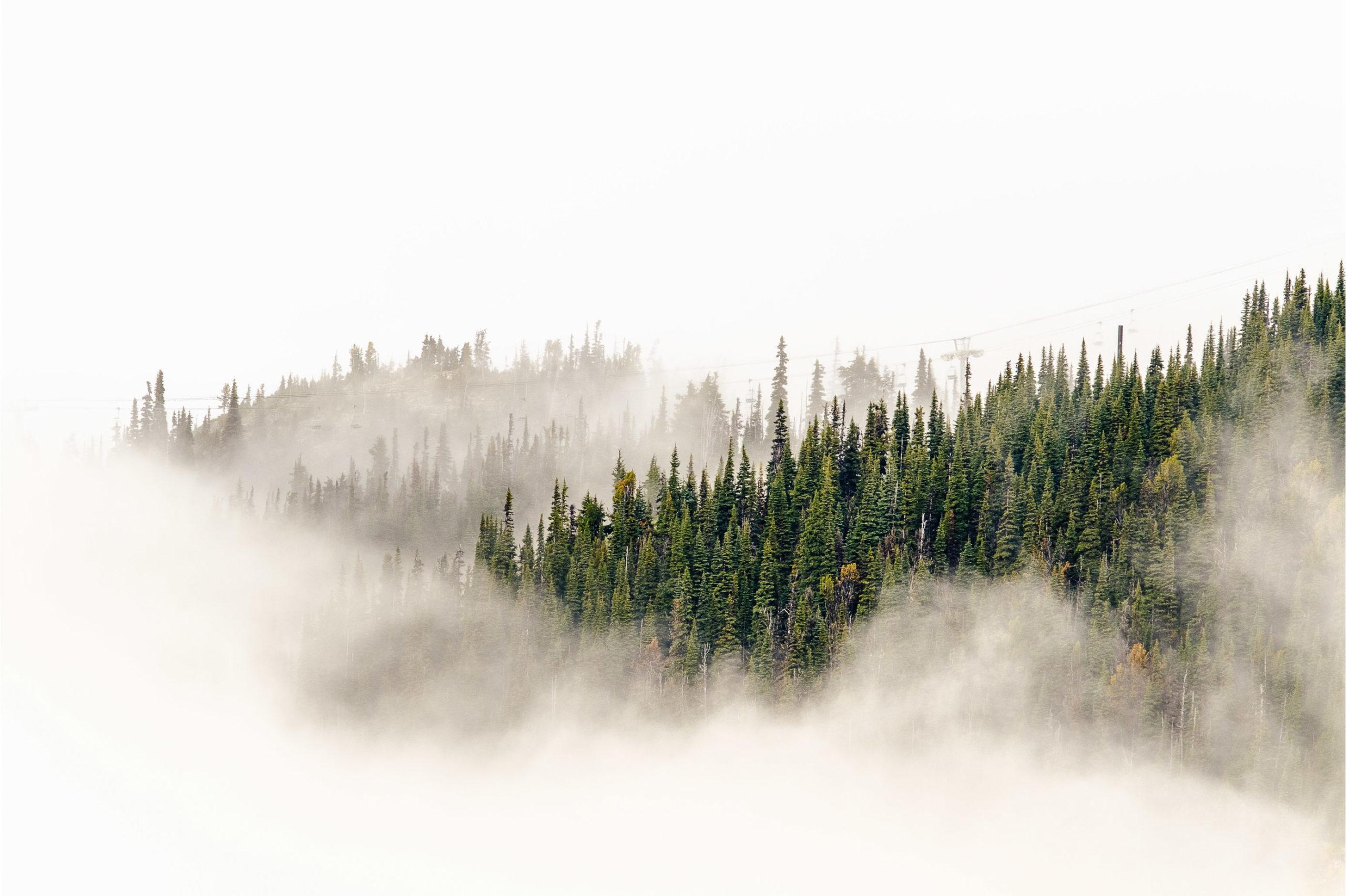 Commercial-Landscapes-26